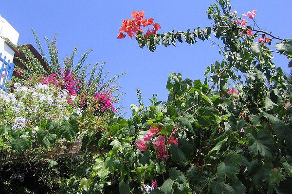 Flora Grecji Jakie Kwiaty Rosna W Grecji Swiat Roslinny Grecji